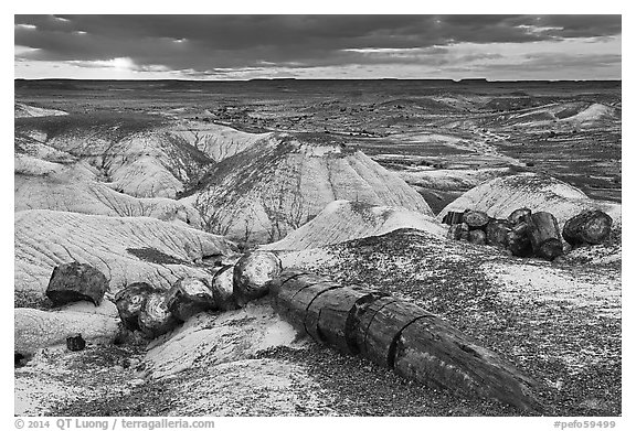 Broken logs of petrified wood at sunset, Crystal Forest. Petrified Forest National Park (black and white)