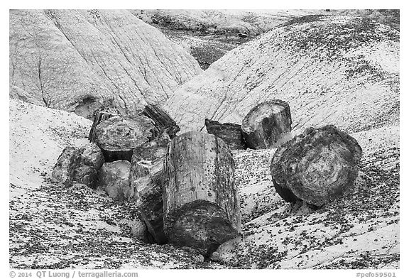 Broken logs of colorful petrified wood, Crystal Forest. Petrified Forest National Park (black and white)