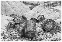 Broken logs of colorful petrified wood, Crystal Forest. Petrified Forest National Park ( black and white)