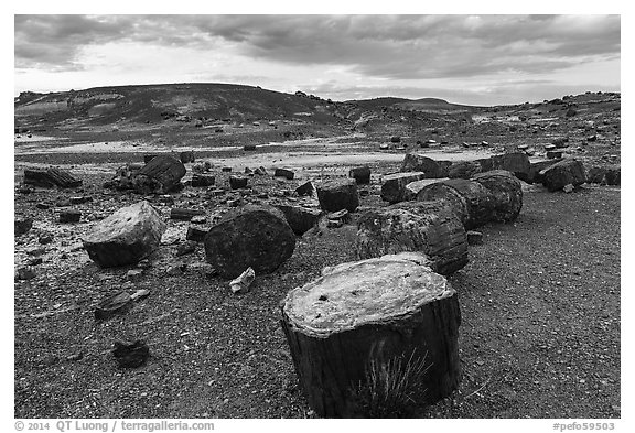 Dense concentration of petrified wood at sunset, Crystal Forest. Petrified Forest National Park (black and white)