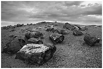 Large petrified wood logs and hill, Crystal Forest. Petrified Forest National Park ( black and white)