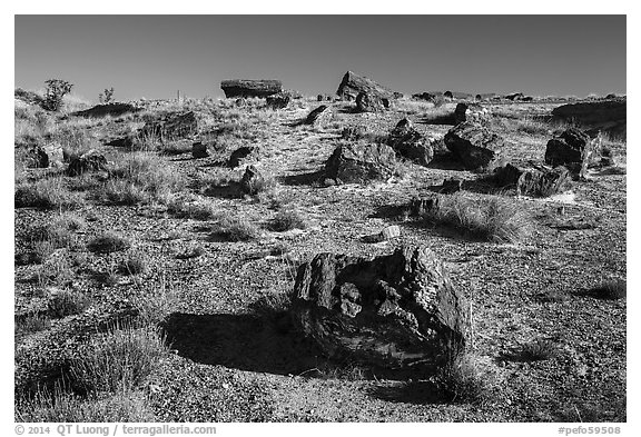 Giant Logs, Rainbow Forest. Petrified Forest National Park (black and white)