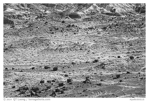 Scattered Jasper Forest petrified wood and badlands. Petrified Forest National Park (black and white)