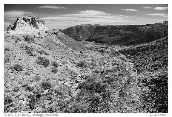 Trail, Painted Desert. Petrified Forest National Park (black and white)