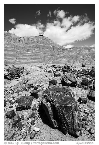 Black petrified wood and red Painted Desert badlands. Petrified Forest National Park (black and white)