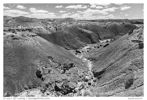 Gully in red badlands filled with petrified wood. Petrified Forest National Park (black and white)