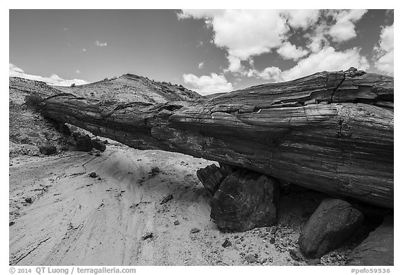 Ancient petrified log laying across arroyo, forming natural bridge called Onyx Bridge. Petrified Forest National Park (black and white)