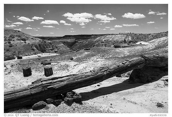 Onyx Bridge, petrified log spanning arroyo. Petrified Forest National Park (black and white)