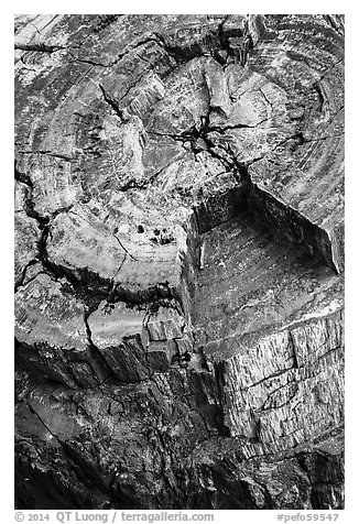 Close-up of black petrified log. Petrified Forest National Park (black and white)
