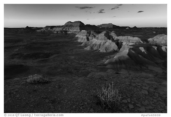 Last light on shrubs, Puerco Ridge. Petrified Forest National Park (black and white)
