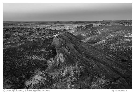 Long petrified longs and badlands at dawn. Petrified Forest National Park (black and white)