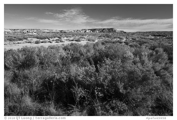 Rabbitbrush and wash. Petrified Forest National Park (black and white)