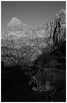 Cactus and Watchman at sunset. Zion National Park ( black and white)