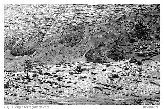 Sandstone checkboard patterns, Zion Plateau. Zion National Park (black and white)