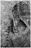 The Pulpit and bare trees, Zion Canyon. Zion National Park, Utah, USA. (black and white)