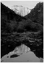 West temple reflected in Pine Creek, sunrise. Zion National Park, Utah, USA. (black and white)