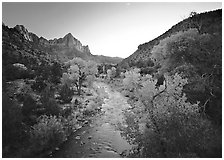Virgin River and Watchman catching last sunrays of the day. Zion National Park ( black and white)