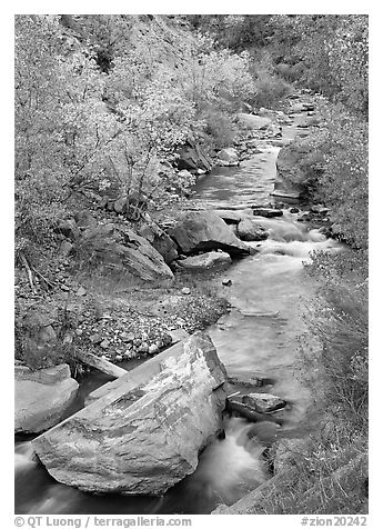 Boulders and Virgin River in the fall. Zion National Park (black and white)
