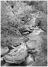 Boulders and Virgin River in  fall. Zion National Park, Utah, USA. (black and white)