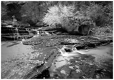 Terraced cascades and tree in fall foliage, Left Fork of the North Creek. Zion National Park, Utah, USA. (black and white)