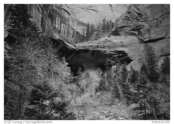 Double Arch Alcove, Middle Fork of Taylor Creek. Zion National Park (black and white)