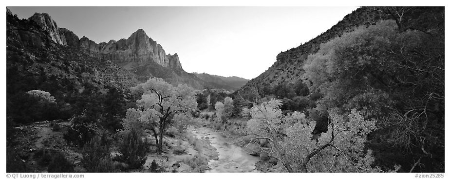 Virgin River, trees, and Watchman at sunset. Zion National Park (black and white)