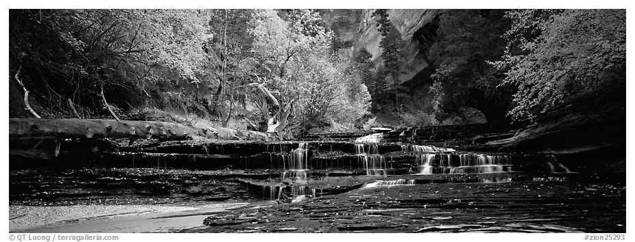 Autumn landscape with terraces flowing over creek. Zion National Park (black and white)