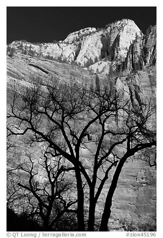 Bare trees and multicolored cliffs. Zion National Park (black and white)