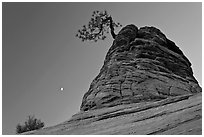Tree growing out of sandstone tower with moon. Zion National Park, Utah, USA. (black and white)