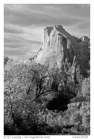 Trees in autumn foliage and Court of the Patriarchs, mid-day. Zion National Park (black and white)