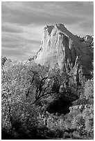 Trees in autumn foliage and Court of the Patriarchs, mid-day. Zion National Park, Utah, USA. (black and white)