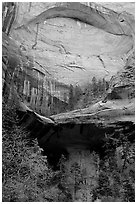 Double Arch Alcove, Middle Fork of Taylor Creek. Zion National Park ( black and white)