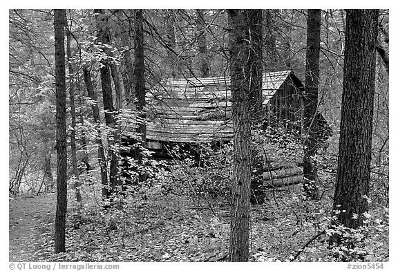 Abandoned historical log cabin, Middle Fork of Taylor Creek. Zion National Park (black and white)