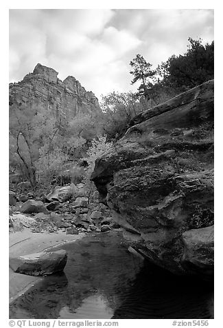 Left Fork of the North Creek. Zion National Park (black and white)