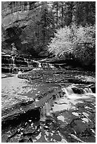 Cascades over terraces, Left Fork of the North Creek. Zion National Park, Utah, USA. (black and white)