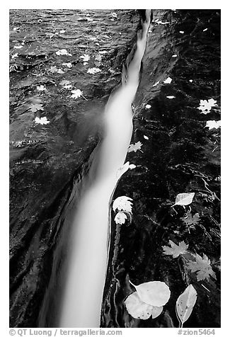 Six inch wide crack where  water of  Left Fork of the North Creek runs. Zion National Park (black and white)