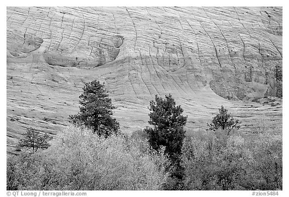 Trees and Checkerboard patterns, Mesa area. Zion National Park (black and white)