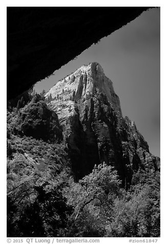 Peak from Weeping Rock alcove. Zion National Park (black and white)