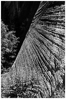 Striated wall, Mystery Canyon. Zion National Park ( black and white)