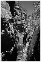 Narrows, Mystery Canyon. Zion National Park ( black and white)