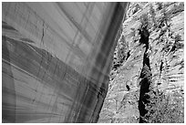 Sheer wall with desert varnish and wall with trees, Mystery Canyon. Zion National Park ( black and white)