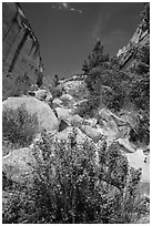 Boulders and landslide, Mystery Canyon. Zion National Park ( black and white)