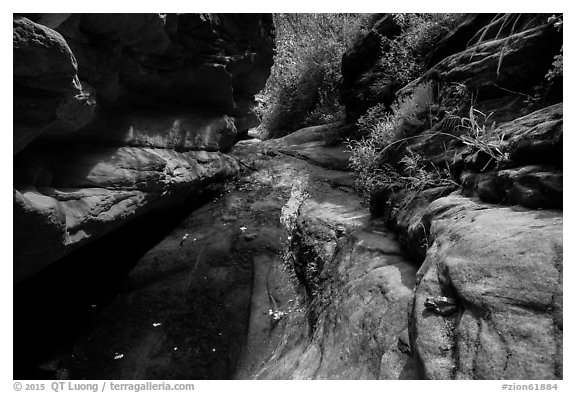 Frog and stream, Mystery Canyon. Zion National Park (black and white)