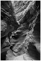 Slot canyon and vegetation, Mystery Canyon. Zion National Park ( black and white)