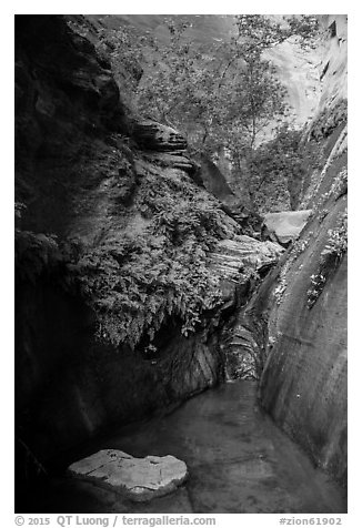 Stream, ferns, and canyon walls, Mystery Canyon. Zion National Park (black and white)