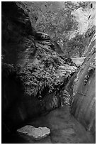 Stream, ferns, and canyon walls, Mystery Canyon. Zion National Park ( black and white)