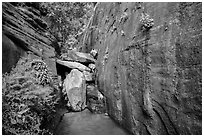 Canyon walls and stream, Mystery Canyon. Zion National Park ( black and white)