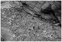 Virgin River Narrows hikers from above. Zion National Park ( black and white)
