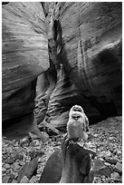 Juvenile owls in sculpted canyon chamber, Pine Creek Canyon. Zion National Park ( black and white)