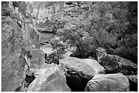 Huge boulders and trees, Pine Creek Canyon. Zion National Park ( black and white)